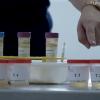 Phibro lança o programa AVIS – Assistência Veterinária e Integralidade Sanitária, uma iniciativa inédita para oferecer suporte a avicultura